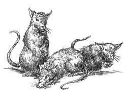 Rats by pulpapocalipsis