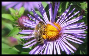 Busy Bee by picworth1000wrds