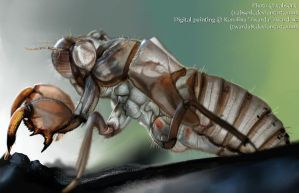 Shell - insect study by Twarda8
