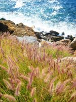 Foxtails and Crashing Waves by ShipperTrish