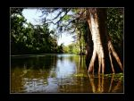 Louisiana Swamps by MissKajunKitty
