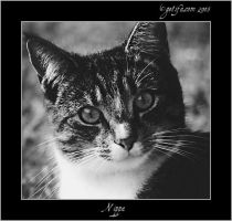 Nippa - Cat Portrait - 4 of 4 by Renilicious