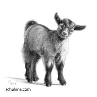Goat baby G097 by sschukina