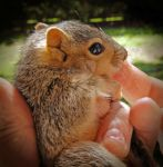 Baby Squirrel by embethe
