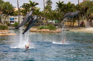 STOCK - Seaworld 2013-50 by fillyrox