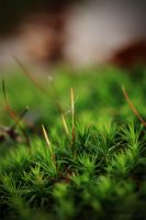 Rising Moss by Florenaut