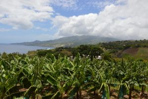 Banana plantation and Saint Pierre in Martinique by A1Z2E3R