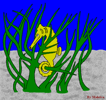 Seahorse by Maleiva