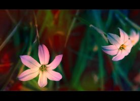 Flower Power by conundrum66