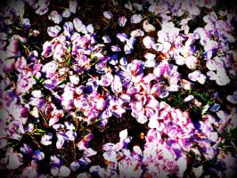 CHERRY BLOSSOM PETALS by spidermonkeykiss