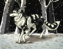 a wolf by sketchi