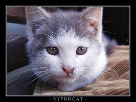 Hypnocat. by TheWojo