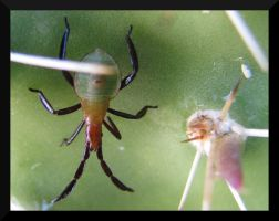 Cactus Aphid by PurlyZig