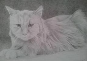 Cat drawing by megh95
