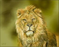 Panthera leo persica - drawing by Lynne-Abley-Burton