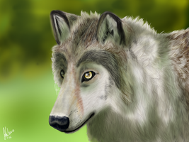 Realistic Wolf by SpiritInSpace