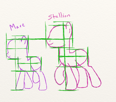 Pony Notes: Mare and Stallion Size Comparison by fuyu-oleander