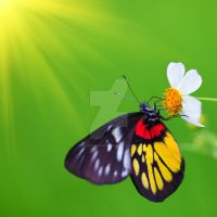 Butterfly by MotHaiBaPhoto