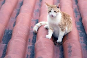 cat on the roof. by Blueberryblack
