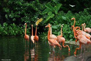 Flamingo flock by MoojUAE