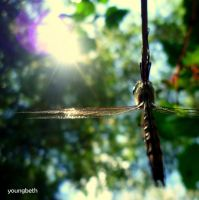 dragonfly:1 by youngbeth