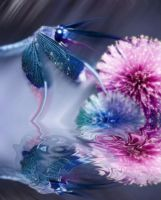 Dragonfly on Water by ElaineG