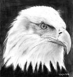 American Bald Eagle by marmicminipark