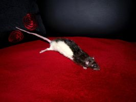 Female rat soft mount - SOLD by StanHoneyThief