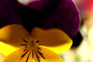 spring horned pansy by nilsxys