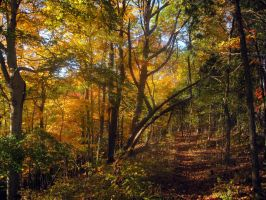 A Quick Autumn Hike by Mistshadow2k4