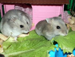 2hamsters by my-craftmania