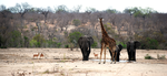 Watering Hole by CompassLogic