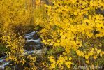 McGee Creek Fall Color by narmansk8