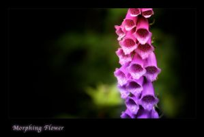 Morphing Flower by Galadiel