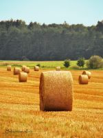 the hay bale by SyNrG81