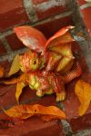 Autumn Leaf Dragon by The-SixthLeafClover