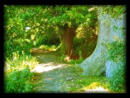 The Elven Path by Forestina-Fotos