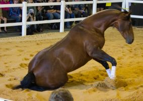 STOCK - 2014 Total Equine Expo-10 by fillyrox