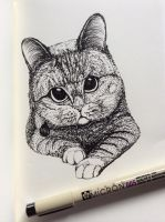 Play with me .... Meow by Nichapon