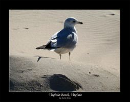 Virginia Beach - Seagull by xproVoke
