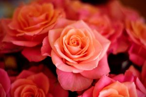 I got some roses for you baby by Glambition