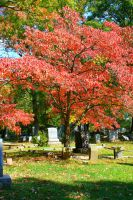 tree at the cemetery by Badgertastic