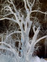 Negative tree2 by Covetous-Creature