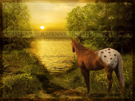 Sunset Appaloosa by jcspenny