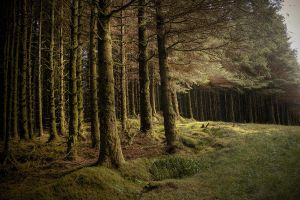 Lough Navar Forest by finkycake