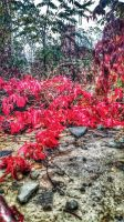 Autumn jewels by vdf