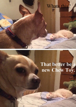 Chewtoy2 by Bootlegs