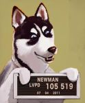 Newman Bad Dog by sayunclecomics