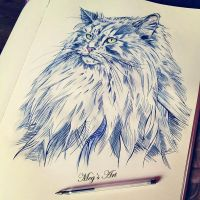 Norwegian Forest cat by stardust12345