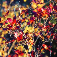 nature's palette by illusionality